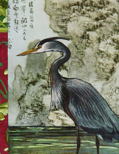 bird-image-blue-heron